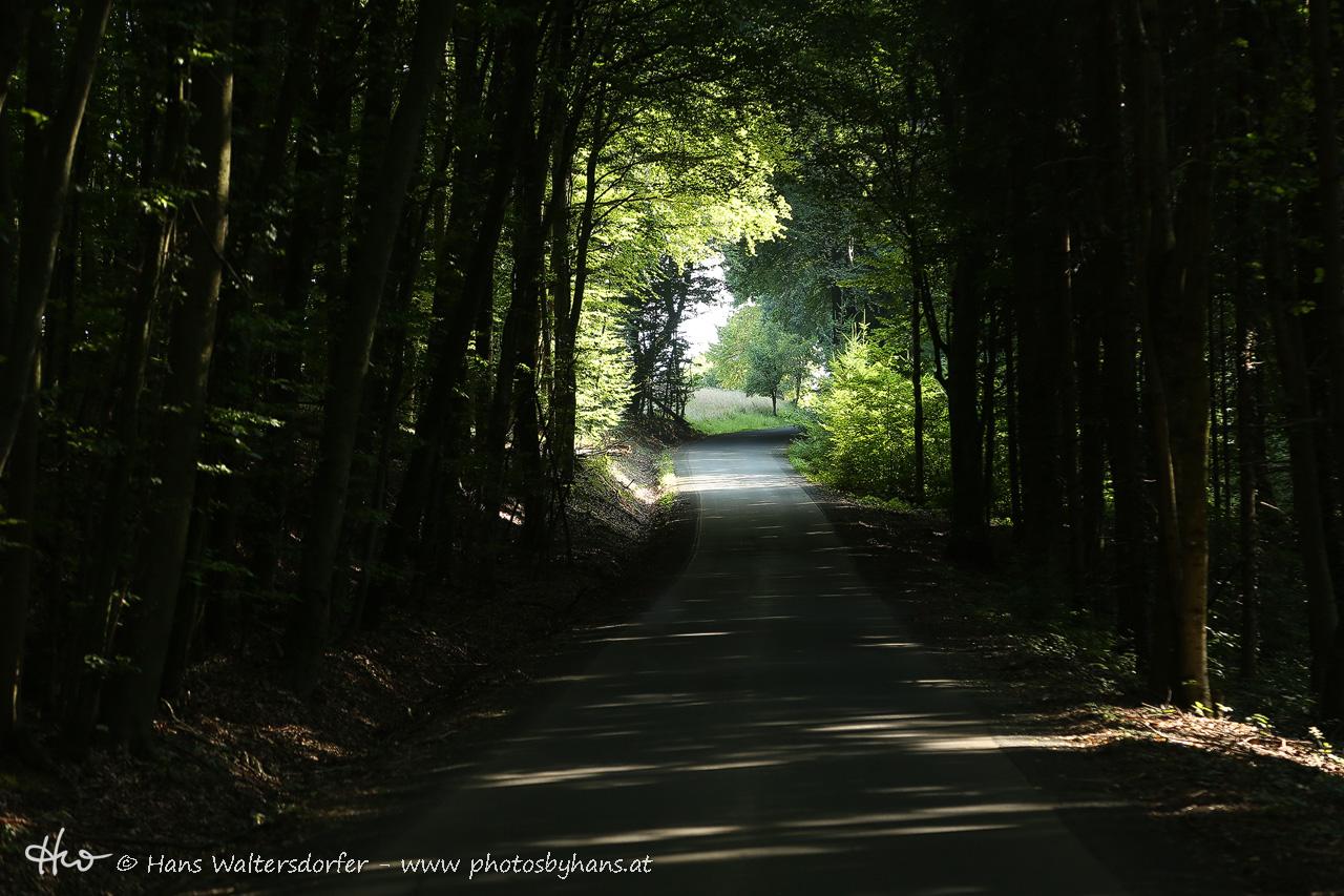 In den Wäldern um Waldprecht